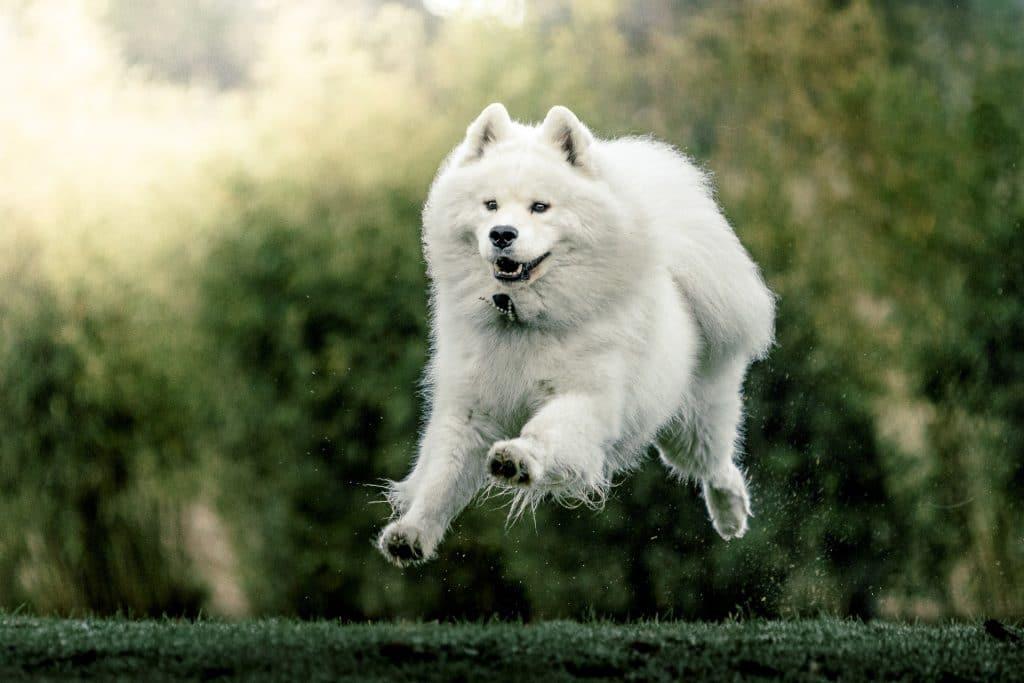 perro saltando - curso fotografía