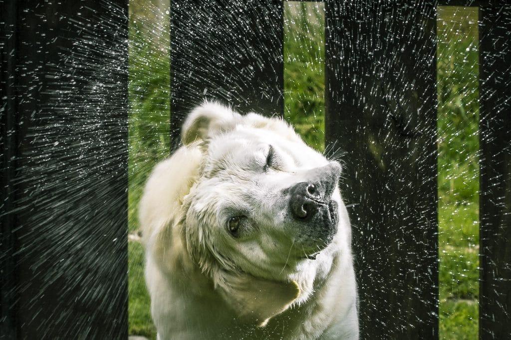 perro sacudiéndose el agua - curso fotografía