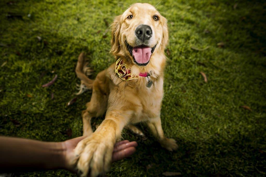 perro dando la pata - curso fotografía
