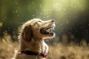 fotografia de perros curso gratis sietefotografos