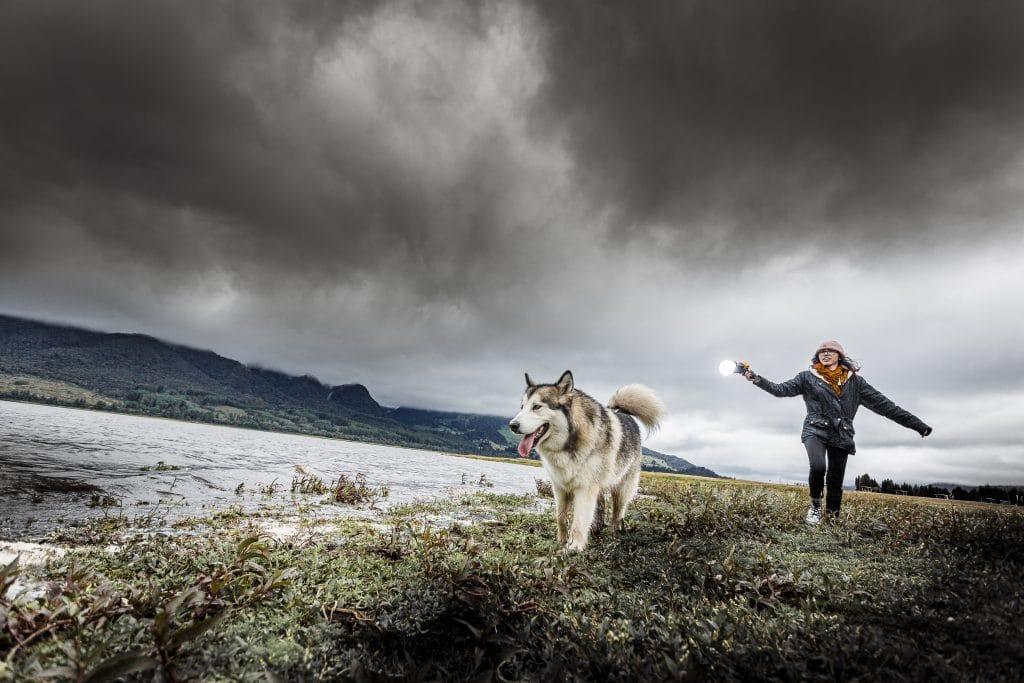 curso de fotografía de perros strobist