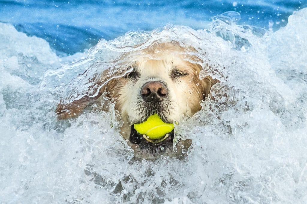 perro atrapando una pelota - curso fotografía