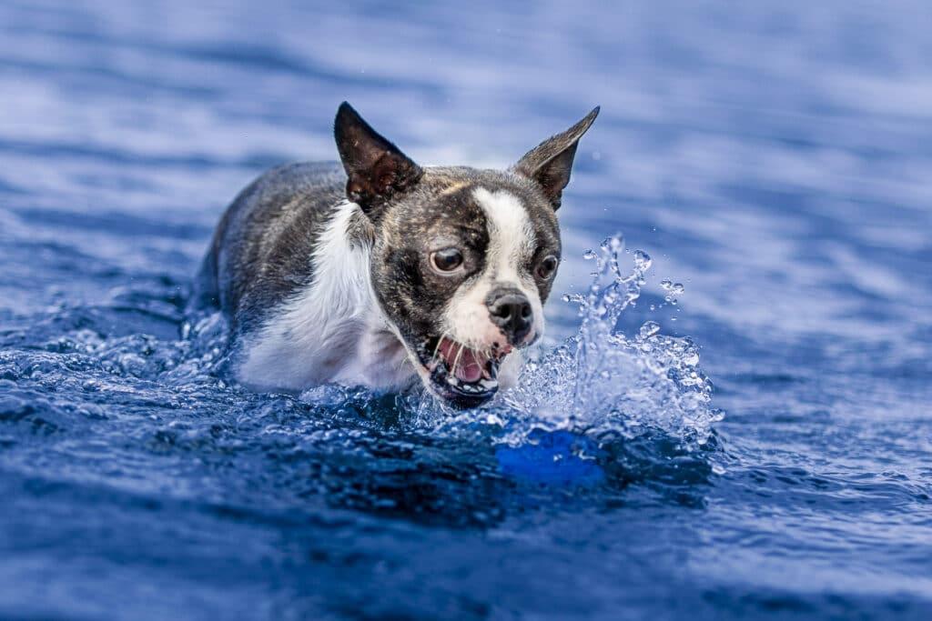 fotografia de perros curso gratis fotoperreria sietefotografos