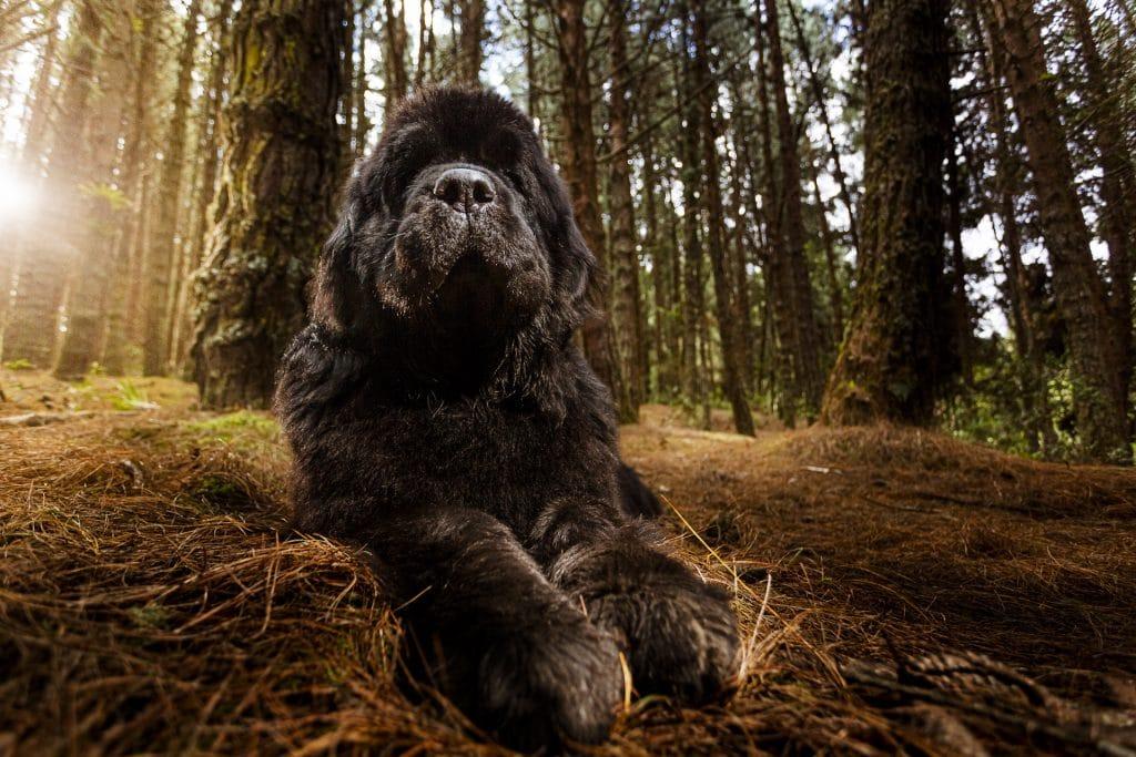 perro negro grande bosque - curso fotografía